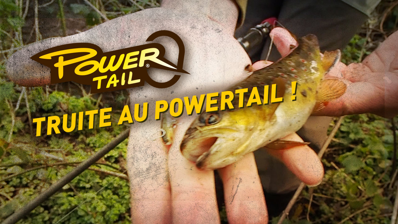 Truite de petit ruisseau au Power Tail