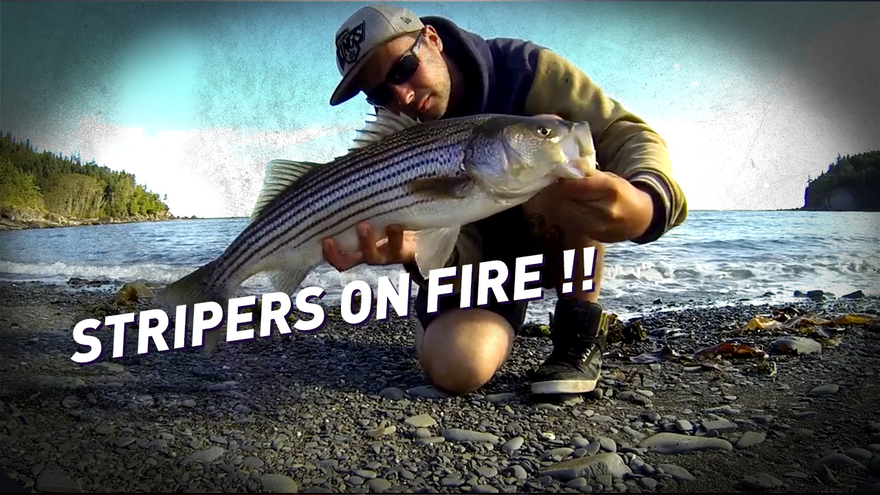Stripers on fire ! Pêche du bar rayé