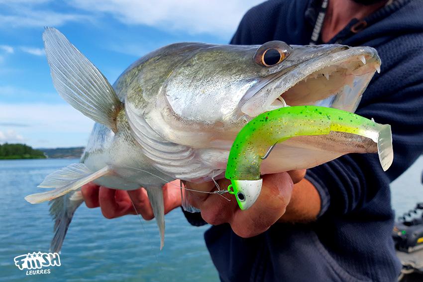 Ludo / Pêcher le sandre l'été