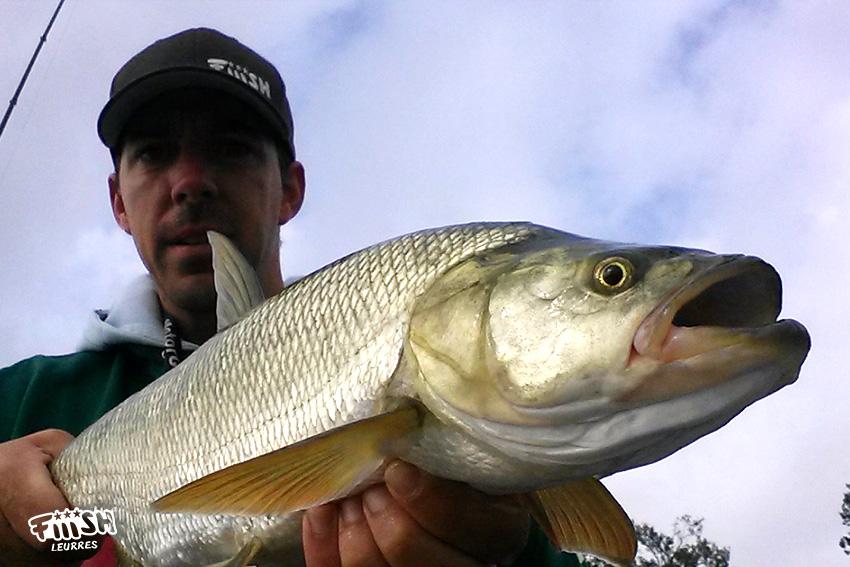 Gros aspe avec le leurre Fiiish Power Tail Freshwater