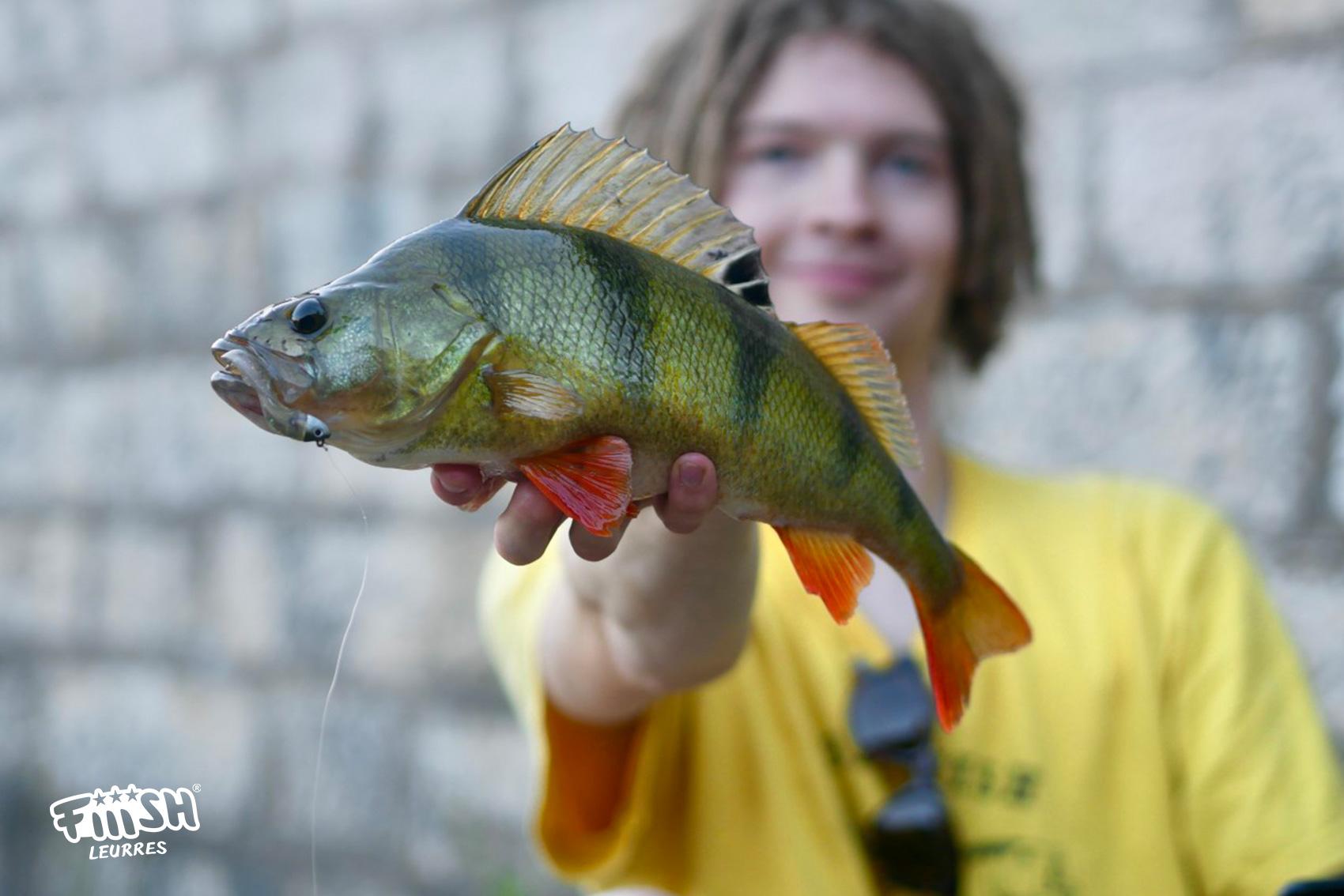 Antonius / Perch in sight fishing